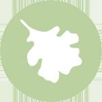 Icon: Black Oak