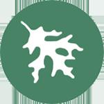 Icon: Pin Oak