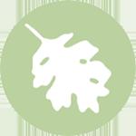 Icon: Red Oak