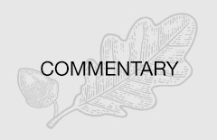 Article category default image: Commentary