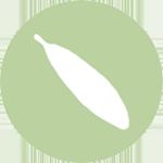 icon: Live Oak